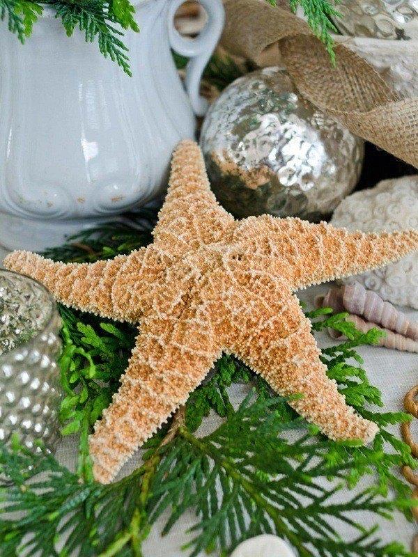 Christmas-star-of-sea