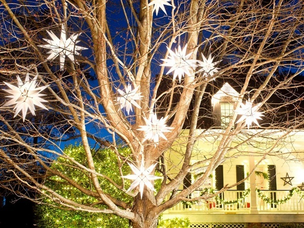 Stars-of-christmas-in-tree-outdoor