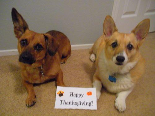 mensajes-graciosos-de-accion-de-gracias-con-mascotas
