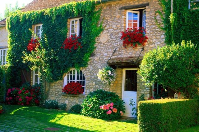 house-rustic-with-flowers-and-plants-climbers