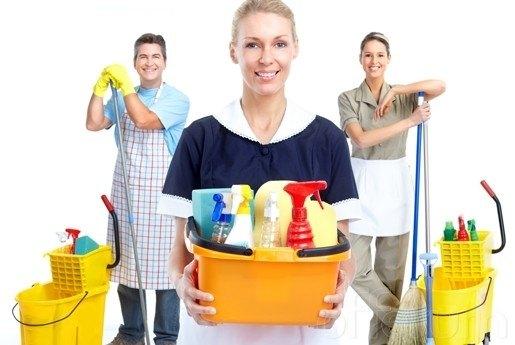 C mo eliminar las pulgas en casa - Pulgas en casa ...