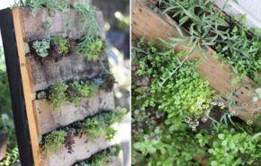 Cómo hacer jardines verticales en casa