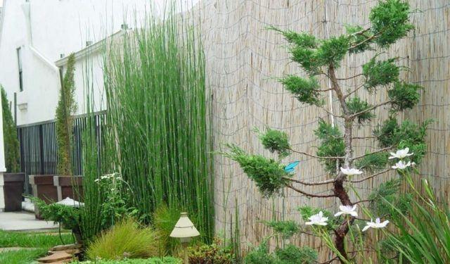 M s de 25 fotos de jardines secos de dise o - Jardin de bambu talavera ...