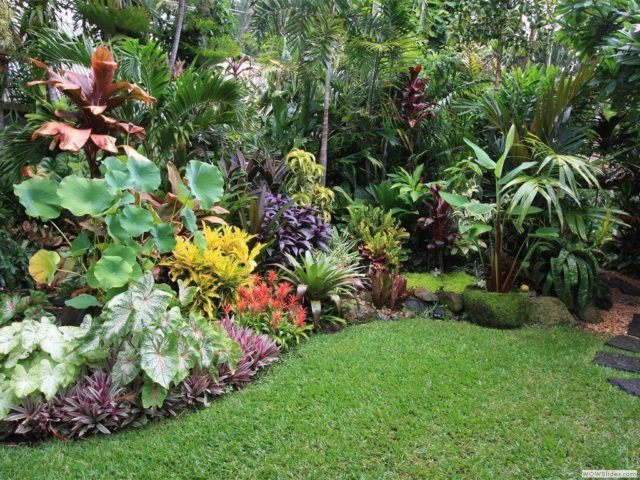 de 20 ideas de jardines tropicales para una casa