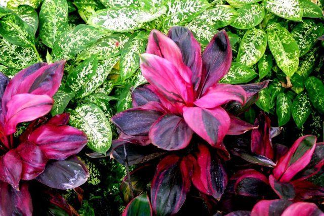 ideas para jardines de casa De 20 Ideas De Jardines Tropicales Para Una Casa