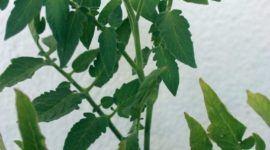Herramientas imprescindibles para cuidar las plantas en terraza o balcón