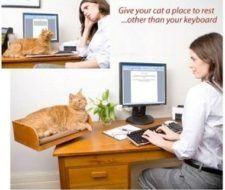 Cómo sacar el gato de tu computadora