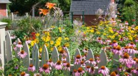 Gardens with flowers: 50 photos with ideas on how to decorate your gardens