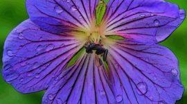 Llena de vida tu casa con flores