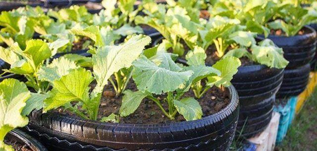 Jardines reciclados jardin neumaticos