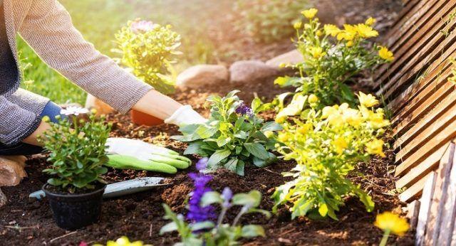 Como elegir flores jardin