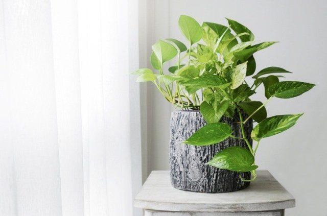Las plantas más fáciles de cuidar de interior y exterior