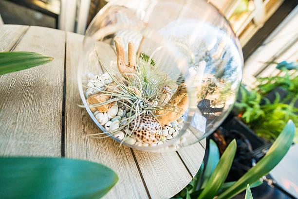 Terrario pecera de cristal idea conchas y piedras
