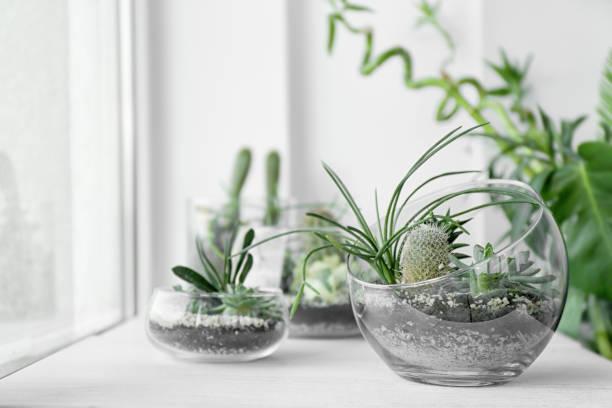 Terrario pecera de cristal idea mini jardin suculentas