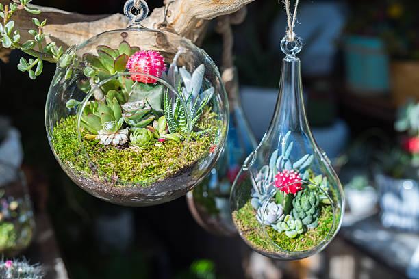Terrario pecera de cristal idea pequeño jardin