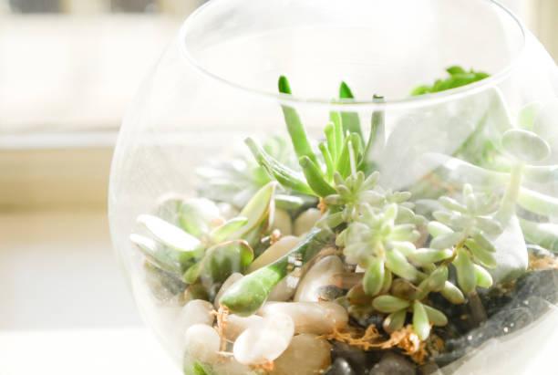 Terrario pecera de cristal idea suculentas piedras