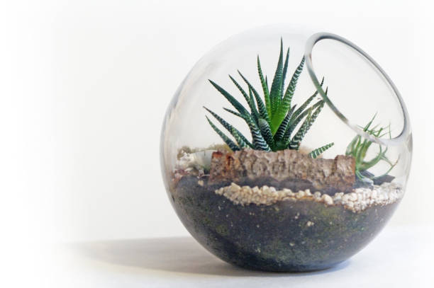 Terrario pecera de cristal ideas estilo aislado