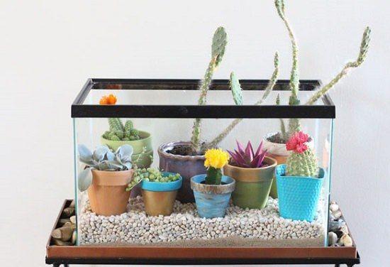 Terrario pecera de cristal ideas estilo bohemio