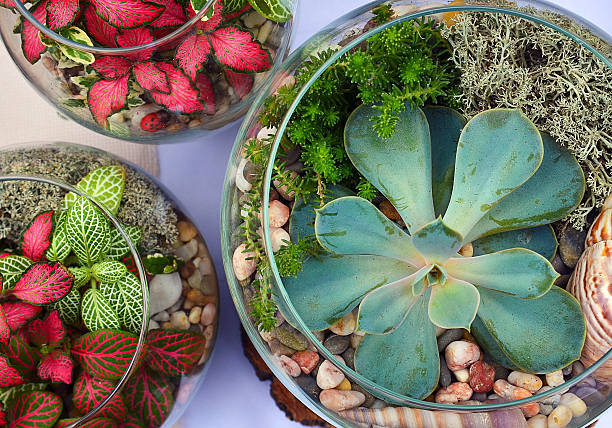 Terrario pecera de cristal ideas suculentas cactus colores