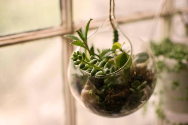 Terrario pecera de cristal ideas tallos colgante