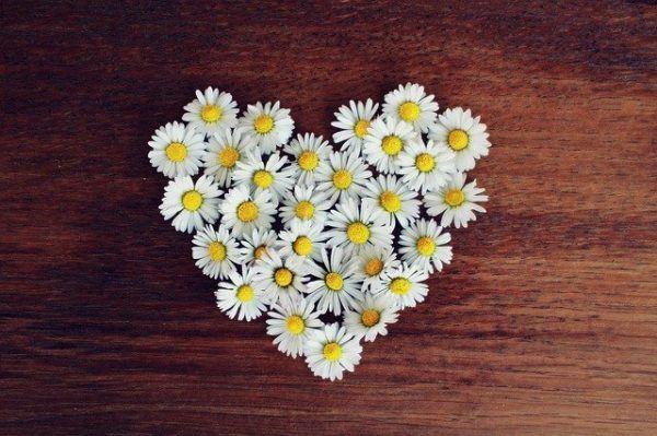 Las flores para decorar la casa en San Valentín 2020