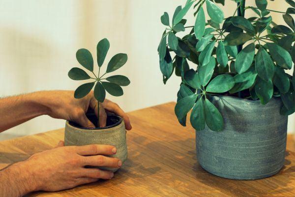 como-decorar-macetas-de-barro-manos-hombre-plantar-istock