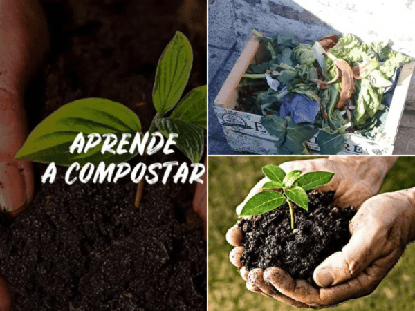 Cómo hacer compost natural: fácil y rápido