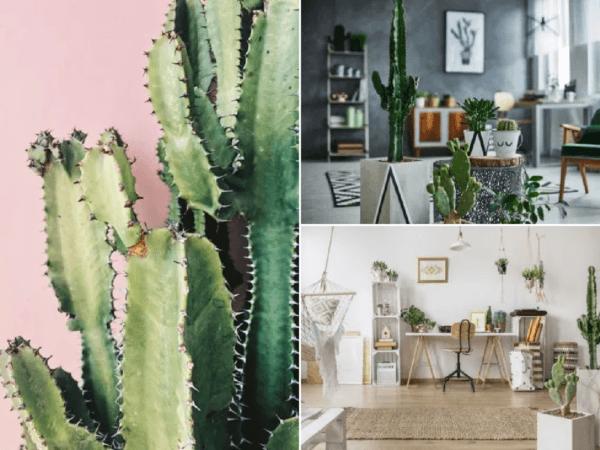 como-decorar-con-cactus