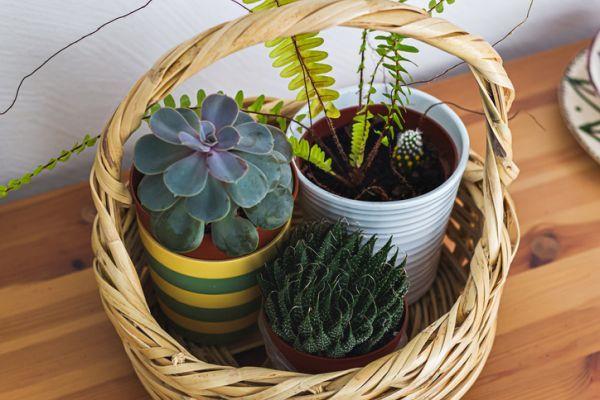 como-decorar-con-cactus-centro-istock