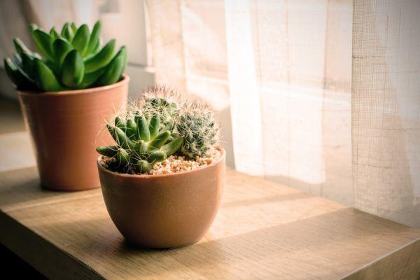 como-decorar-con-cactus-junto-a-la-ventana-istock