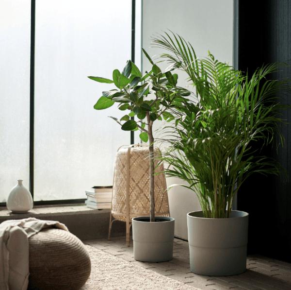 Descuentos y ofertas del Blue Monday en muebles y decoración Ficus Ikea