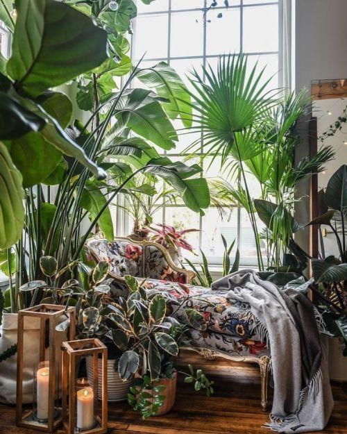 Plantas verdes patio