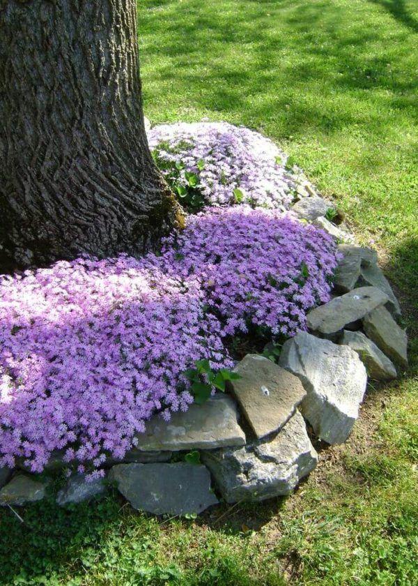Jardin rustico ideas macizo flores