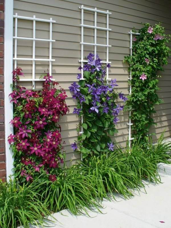 Jardin rustico ideas muro escalada