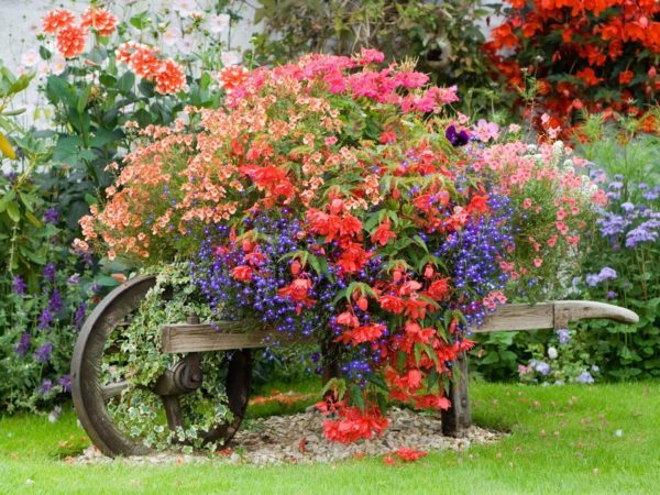 Jardin rustico ideas plantas colores