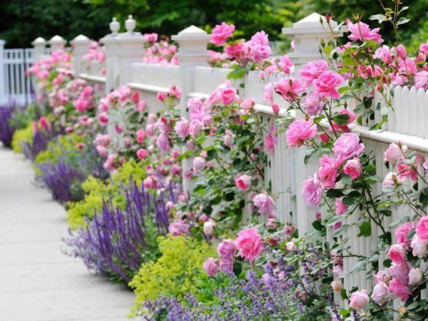 Jardin rustico ideas valla flores