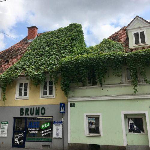 Trepadoras sobre tejado