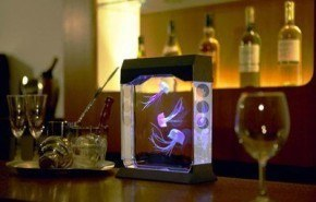 Aquapict. Acuario electrónico de medusas