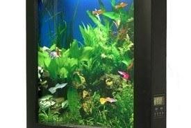 Aquavista, un acuario en tu hogar