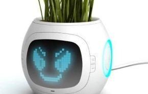 Pet Plant, una planta mascota inteligente