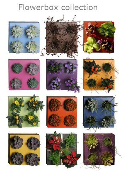 flowerbox2.jpg