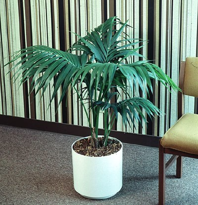 C mo higienizar ambientes con plantas - Tipos de plantas de interior ...