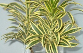 Ideas para decorar con plantas, pero sin tierra