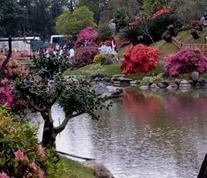jardin-japones