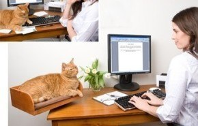 Un lugar exclusivo para tu gato sobre el escritorio