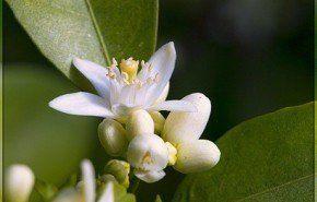 Plantas que atraen la buena suerte