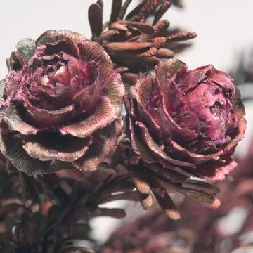 rosas-secas.jpg